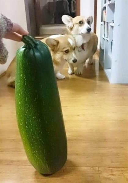 怯えてる犬の画像(17枚目)