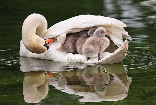 色々な動物の親子の癒される画像の数々!!の画像(2枚目)