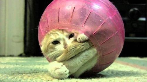 なぜ猫は狭いところが好きなのか??挟まっている猫の画像の数々wwwの画像(18枚目)