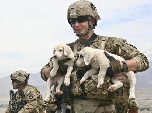 辛くても癒される!軍用犬でほのぼのしている写真の数々!!の画像(5枚目)