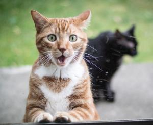 動物達が驚いている瞬間の表情をとらえた写真が凄い!の画像(11枚目)