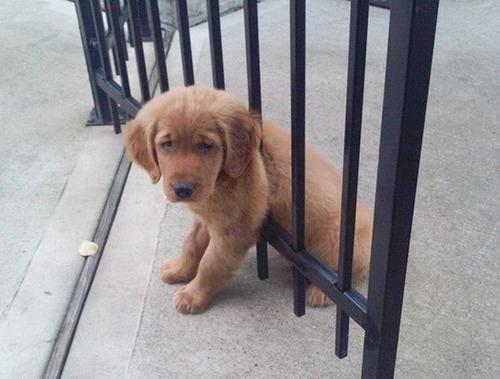 犬はバカ可愛い!!バカだけど憎めない可愛い犬の画像の数々!!の画像(31枚目)