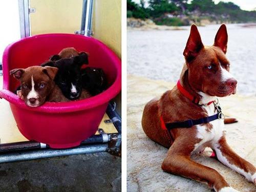 捨犬の時と良い飼主が見つかった時のワンちゃんのほのぼの比較画像の数々!!の画像(22枚目)
