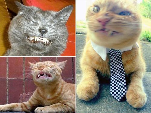 凶悪そうな猫の画像(7枚目)