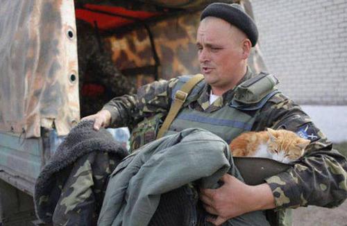 戦場にもネコは居る!!極限状態でも癒される戦場のネコの画像の数々!!の画像(21枚目)