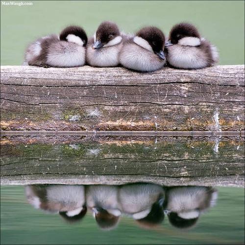 超過密!密集状態の鳥の画像がもふもふで癒されるwwの画像(19枚目)