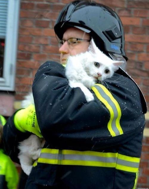 【画像】動物達も本気で助ける!ちょっと癒されるレスキュー隊の仕事の様子!!の画像(12枚目)