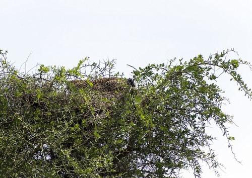 【画像】この木に近づいたら死にます…恐ろしすぎる獣が潜んでいる木。。の画像(3枚目)
