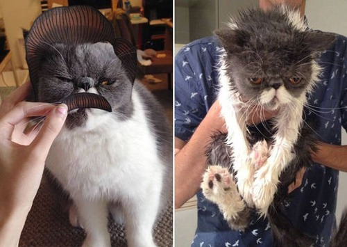猫ちゃんの濡れる前後の比較の画像(11枚目)
