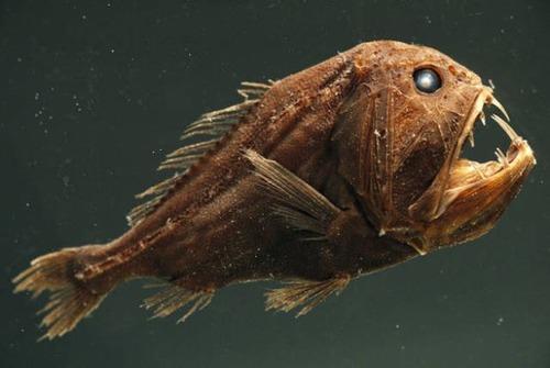 深海の生物の画像(17枚目)