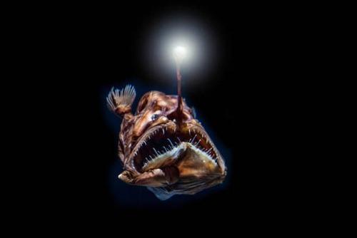 深海の生物の画像(6枚目)