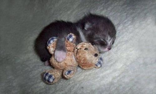 kittens_20