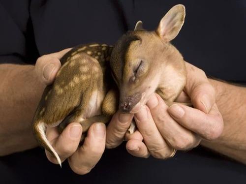 かわい過ぎる!癒される!動物の子供の画像の数々!!の画像(29枚目)