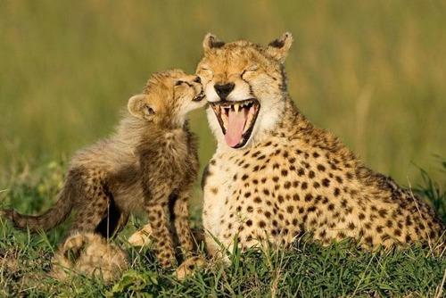 ほのぼのするけどちょっと怖い!幸せそうな動物たちの写真の数々!の画像(4枚目)