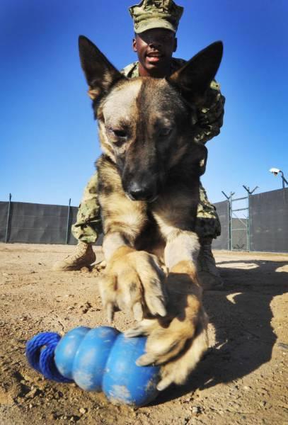 戦地での軍用犬の日常がわかるちょっと癒される画像の数々!!の画像(5枚目)