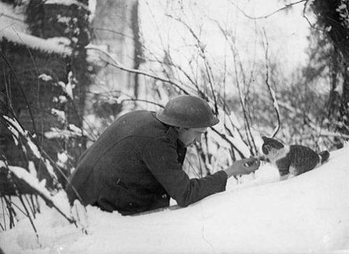 戦場にもネコは居る!!極限状態でも癒される戦場のネコの画像の数々!!の画像(25枚目)
