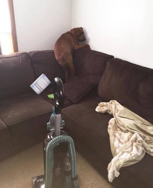 怯えてる犬の画像(2枚目)