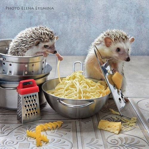 secret_world_of_hedgehogs_12