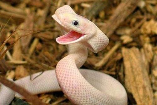 ほのぼのするけどちょっと怖い!幸せそうな動物たちの写真の数々!の画像(11枚目)