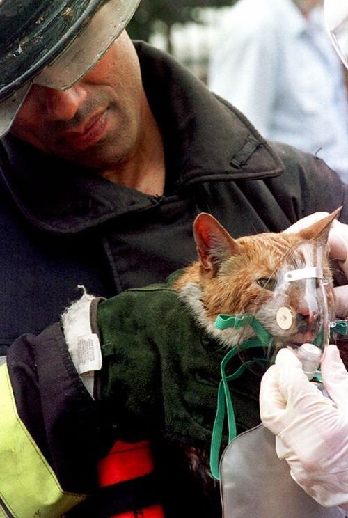 【画像】動物達も本気で助ける!ちょっと癒されるレスキュー隊の仕事の様子!!の画像(30枚目)