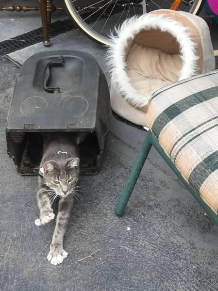 にゃんとも言えない、ちょっと困った猫の画像の数々!!の画像(30枚目)