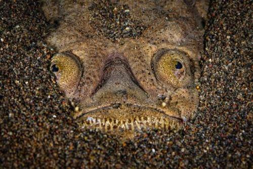 深海の生物の画像(23枚目)