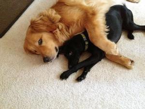 ずっと友達!仲がいい犬たちの画像が癒される!!の画像(7枚目)
