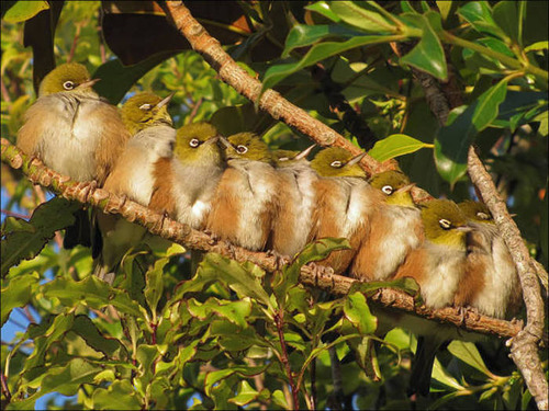 超過密!密集状態の鳥の画像がもふもふで癒されるwwの画像(16枚目)