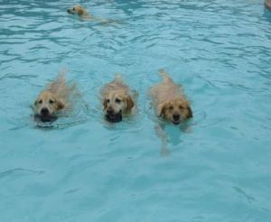 プールが好き!水泳が大好きな犬で大混雑している動画の画像(4枚目)