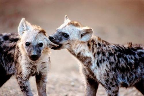 ほのぼのするけどちょっと怖い!幸せそうな動物たちの写真の数々!の画像(16枚目)