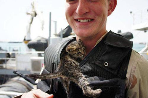 戦場にもネコは居る!!極限状態でも癒される戦場のネコの画像の数々!!の画像(18枚目)