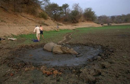 【画像】底なし沼に入った像の救出風景が感動的!!の画像(6枚目)