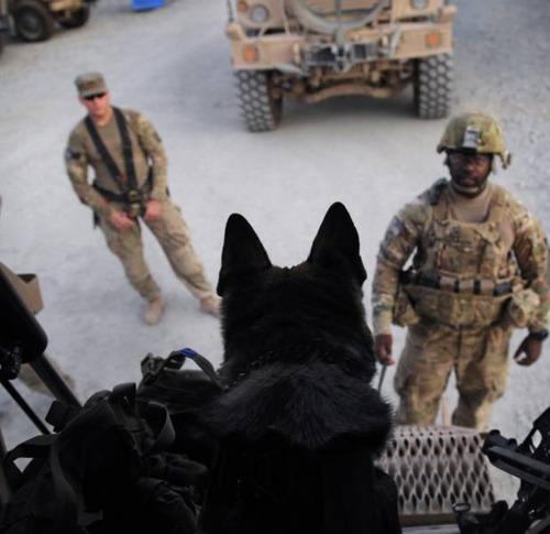 戦地での軍用犬の日常がわかるちょっと癒される画像の数々!!の画像(50枚目)