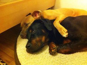 ずっと友達!仲がいい犬たちの画像が癒される!!の画像(11枚目)