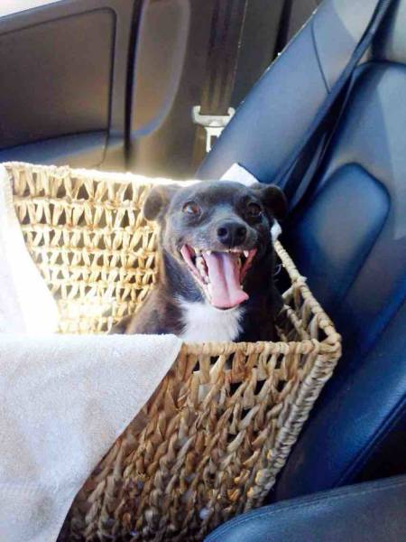 犬も笑うの画像(22枚目)