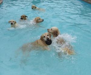プールが好き!水泳が大好きな犬で大混雑している動画の画像(3枚目)