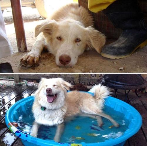 捨て犬が保護された前後の画像(21枚目)