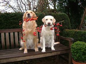 ずっと友達!仲がいい犬たちの画像が癒される!!の画像(27枚目)