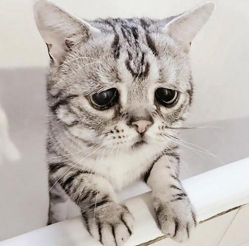 悲しくなってしまう猫の画像(10枚目)