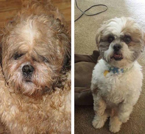 捨犬の時と良い飼主が見つかった時のワンちゃんのほのぼの比較画像の数々!!の画像(2枚目)