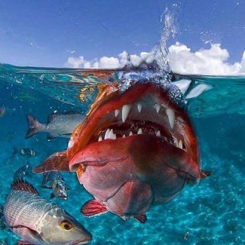深海の生物の画像(11枚目)