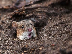 動物達が驚いている瞬間の表情をとらえた写真が凄い!の画像(31枚目)