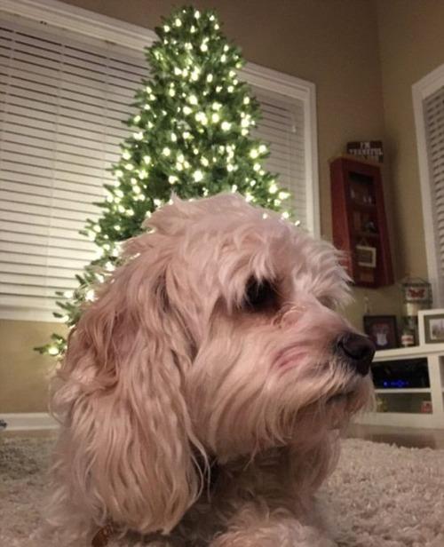 犬とクリスマスの画像(10枚目)