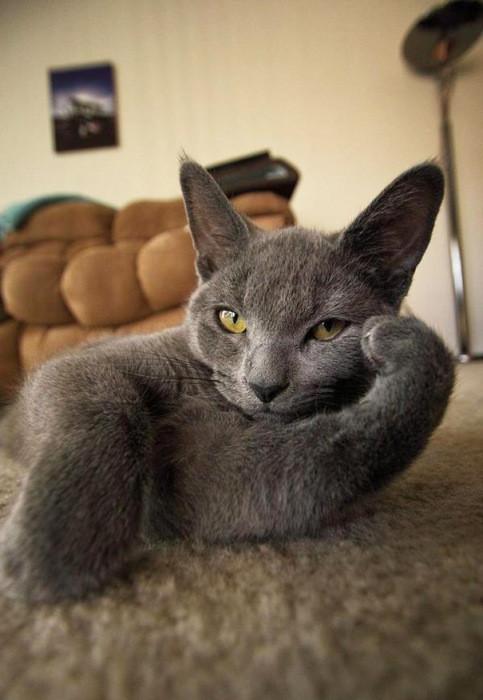 面倒くさい…疲れた…眠い…そんな感じの動物たちの画像!!の画像(34枚目)