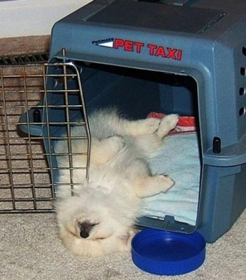 子犬が眠っているの画像(17枚目)