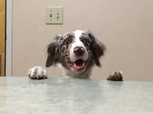 犬も笑うの画像(14枚目)