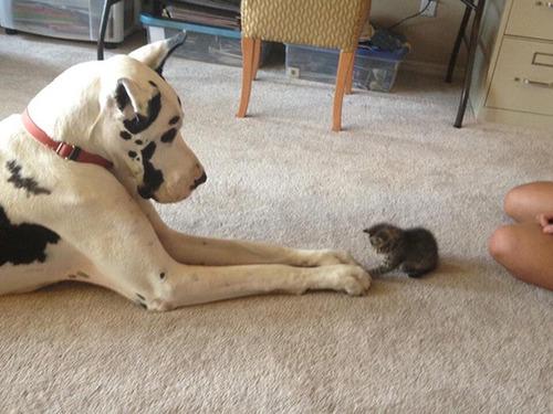 ほのぼのする!仲の良い犬と猫の画像の数々!!の画像(30枚目)