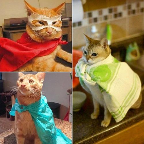 猫ちゃんのかわいいコスプレの画像(9枚目)