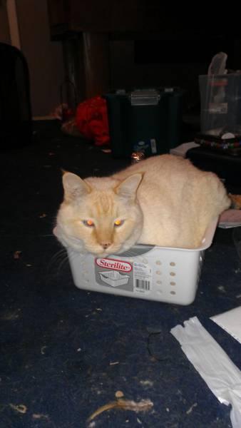 にゃんとも言えない、ちょっと困った猫の画像の数々!!の画像(27枚目)