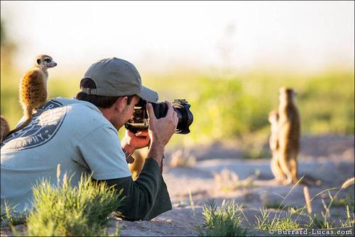 【画像】自然を撮影するカメラマンに興味津々の動物達!!の画像(25枚目)